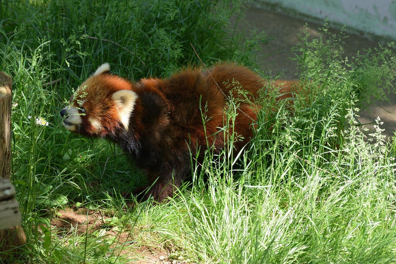 さいたま市緑区の大崎公園で動物を撮影